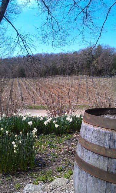 McLaughlin Vineyards